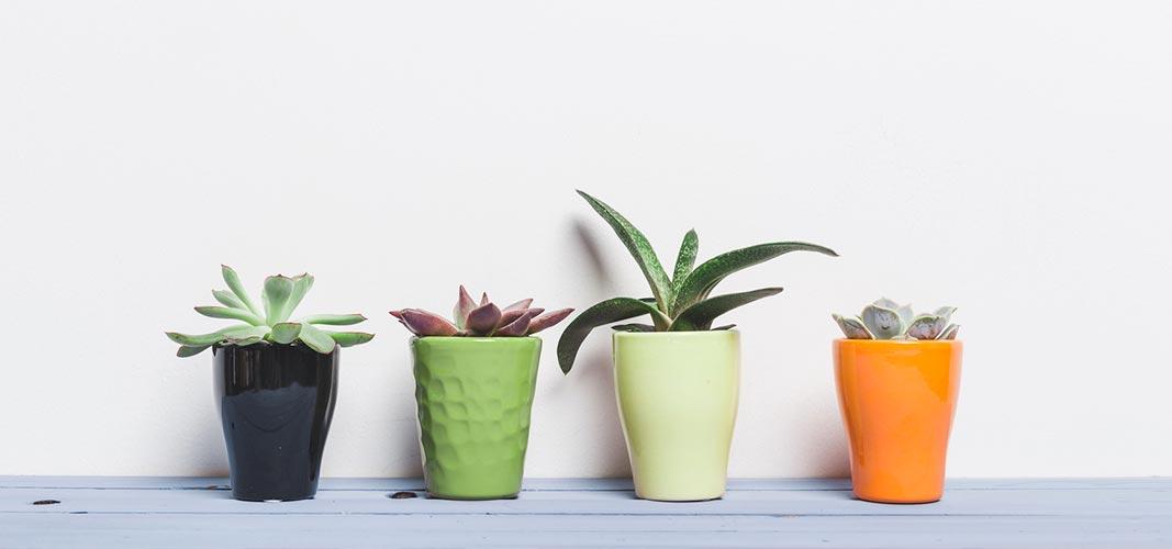 Unser Tipp: Stelle dir eine schöne Aloe Vera an deinen Lieblingsplatz.