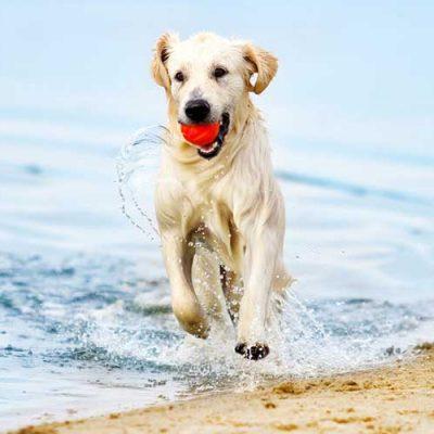 Sommer-Hunde-Spass