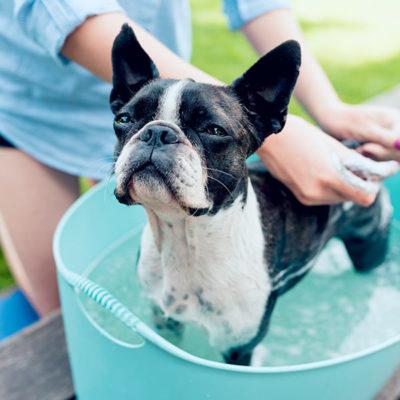 dog-dusche