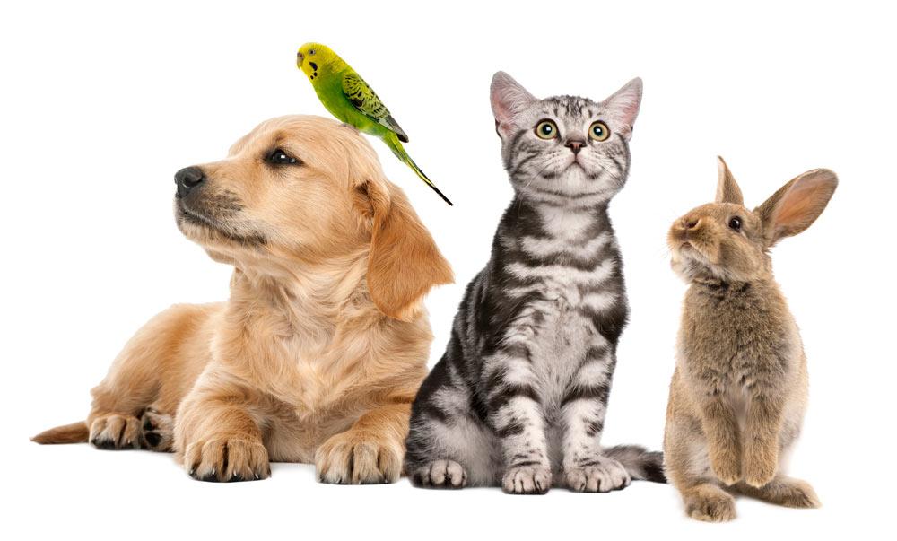 Der Hund liegt mit 11,5 Millionen Besitzern an zweiter Stelle.