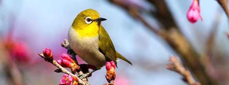Positiv Denken und sich an den Kleinigkeiten des Tages erfreuen, Vogel i  Garten macht glücklich.