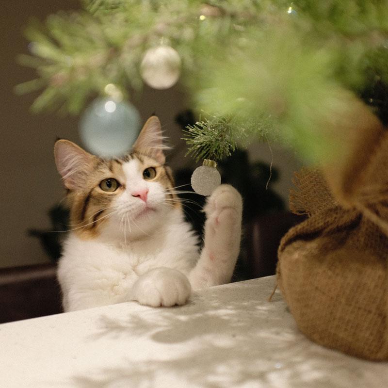 Tierprodukte Weihnachten