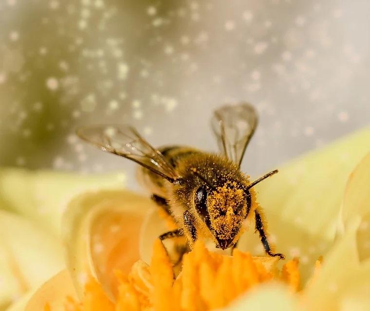 Biene im Blütenparadies