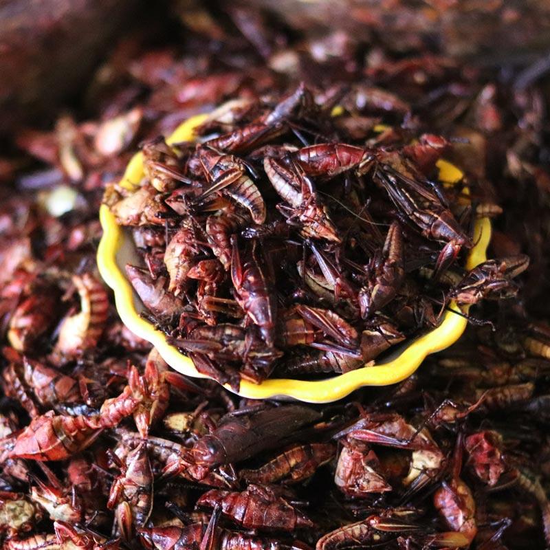 Foodtrend Insekten